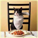 catdinner